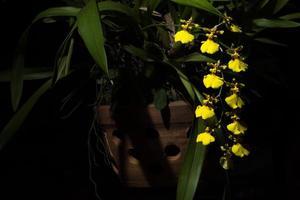 flor amarilla sobre fondo negro