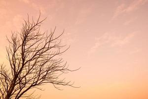 Sunlight in the orange sky photo