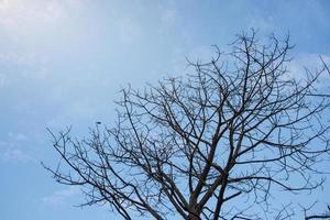 árbol seco y cielo azul