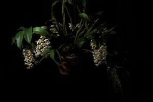flor blanca sobre fondo negro