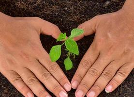 Human's hands holding tree planting young