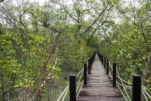 pasarela en el bosque de manglar foto
