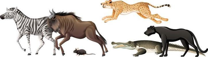 Group of wild african animal on white background vector
