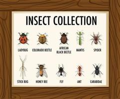 Conjunto de banner de colección de insectos en mesa de madera vector