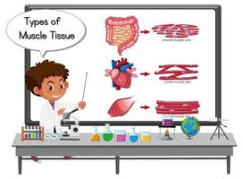 Young scientist explaining types of muscle tissue in front of a board with laboratory elements vector