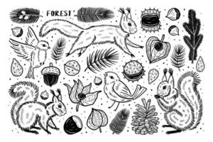 Forest set of elements clip art. Animals nature plants. Squirrel bird pine nut chestnut branch seed physalis winter cherry.