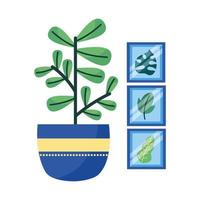 Isolated plant and frames vector design
