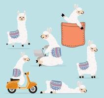Cartoon llama and alpaca character collection vector
