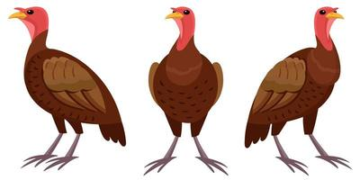 Turkey in different poses.