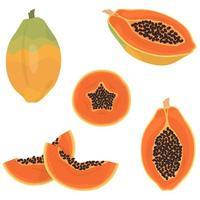 papaya entera y en rodajas. vector