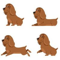 Cocker spaniel in different poses. vector