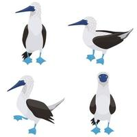 Blue-footed booby in different poses. vector