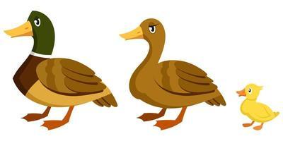 familia de patos en estilo de dibujos animados. vector