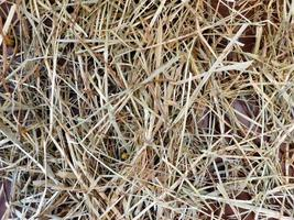 Straw texture outdoor