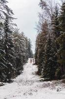 Snowy slope in winter photo