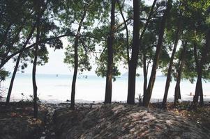 Vietnam beach paradise palms