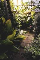 Tropical garden view