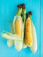 Vista superior de las mazorcas de maíz sobre fondo azul 2