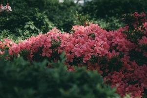 Beautiful pink garden flowers