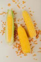Vista superior de las mazorcas de maíz con semillas de maíz sobre fondo blanco.