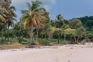 palmeras del paraíso de la playa de vietnam foto
