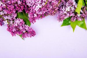Top view of lilac flowers isolated on white background with copy space photo