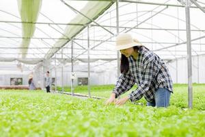 Woman inspecting plants photo
