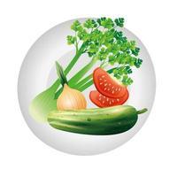 apio cebolla tomate y pepino diseño vectorial vegetal vector