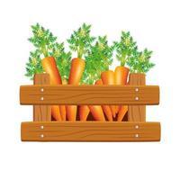 Zanahorias aisladas dentro de diseño vectorial de caja vector