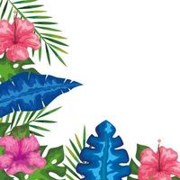 decoration of hibiscus flowers with branches and leaves, tropical nature, spring summer botanical vector