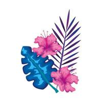 hibiscus flowers pink color with branches and leaves, tropical nature, spring summer botanical vector