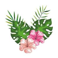 hibiscus flowers with branches and leaves, tropical nature, spring summer botanical vector