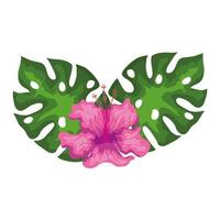 hibisco hermoso color rosa con hojas, naturaleza tropical, primavera verano botánico vector