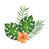 hibiscus with branches and leaves, tropical nature, spring summer botanical vector