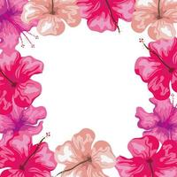 frame of hibiscus flowers pink color, tropical nature, spring summer botanical vector