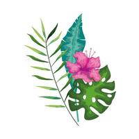 hibiscus beautiful pink color with branch and leaves, tropical nature, spring summer botanical vector