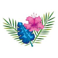 hibiscus beautiful pink color with branches and leaves, tropical nature, spring summer botanical vector
