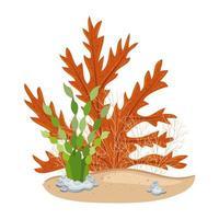 algas submarinas, plantas de algas marinas acuáticas vector
