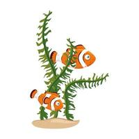 sea underwater life, anemone fishes with seaweed, clown fishes on white background vector