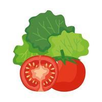 diseño vectorial de tomates y lechuga
