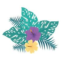 decoration of hibiscus yellow and purple color, with tropical leaves, spring summer botanical vector