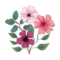 flowers purple and pink color with branches and leaves, on white background vector