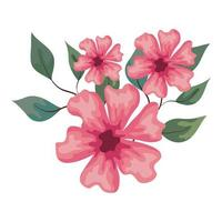 flowers pink color with branches and leaves, on white background vector