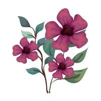 flowers purple color with branches and leaves, on white background vector