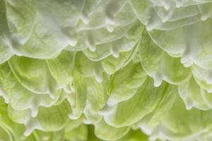 Green lotus petals photo