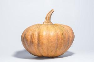 Pumpkin on White Background photo