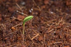 Close-up photo of a sapling
