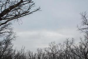 árboles secos y cielo gris foto