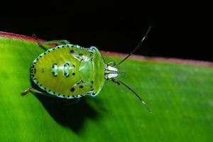 Stink Bug on a leaf