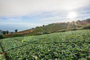 Vegetable farm in summer